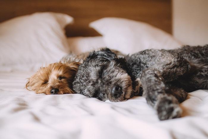 Deka pre psa na pokojný spánok